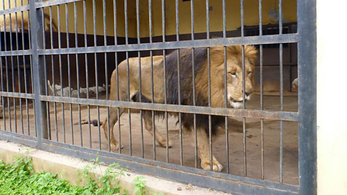 Are Zoos And Aquariums Necessary In Modern Times?
